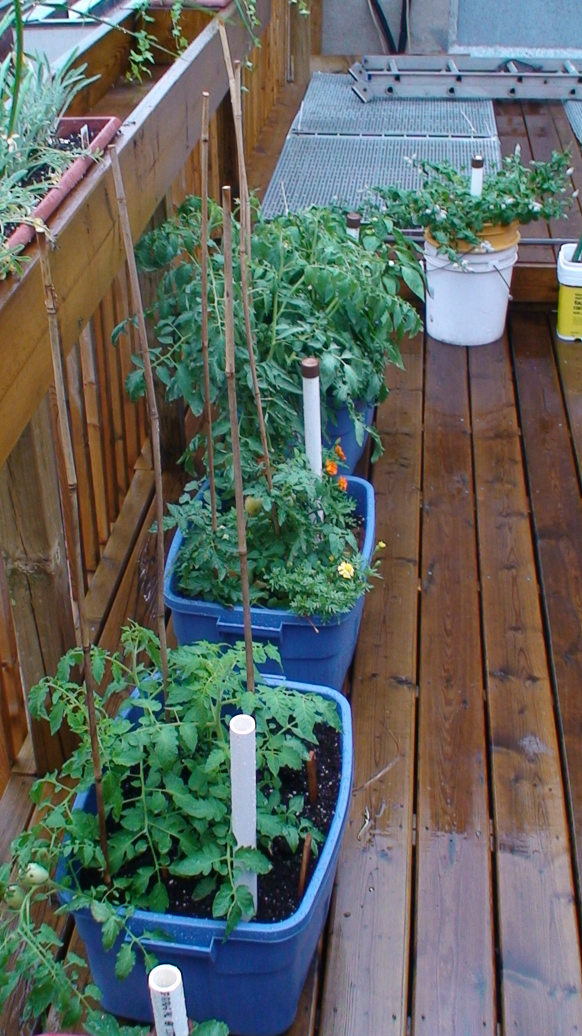 Self Watering Containers Green Venture 39 S Blog