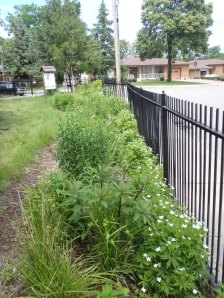Rain Gardens at Ecohouse