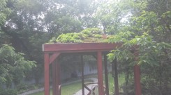 EcoHouse Green Roof